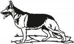 hond 0005