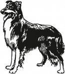 hond 0006