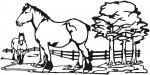 paard 0001