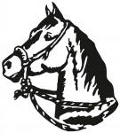 paard 0008