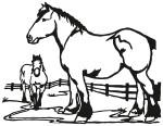 paard 0009