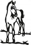 paard 0015