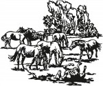 paard 0017