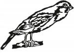 vogel 0001