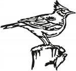 vogel 0002