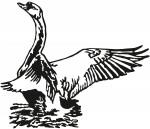 vogel 0009