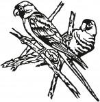 vogel 0020