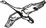 vogel 0021